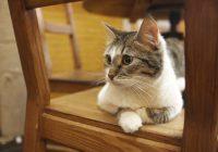 Ученые выяснили причину реакции кошек на свое имя