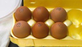 Опасные яйца: учёные обнародовали данные исследования