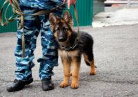 Для владельцев собак может появиться экзамен