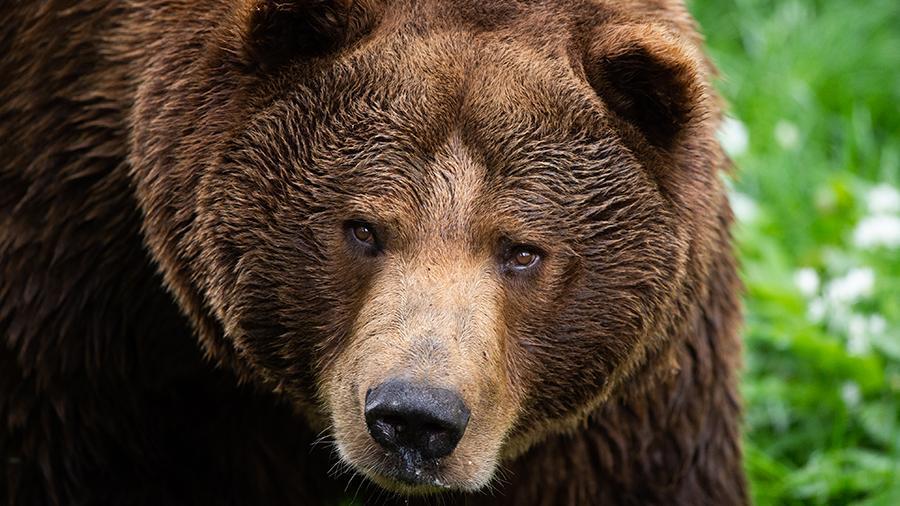Медведь пришел на детскую площадку под Красноярском
