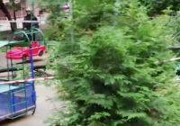 В Москве ребёнка убило деревом: СК возбудил уголовное дело