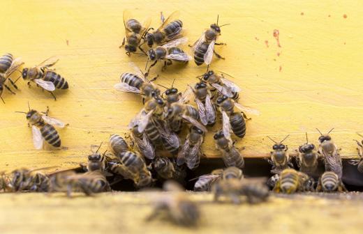 СК РФ возбудил уголовное дело из-за гибели орловских пчел