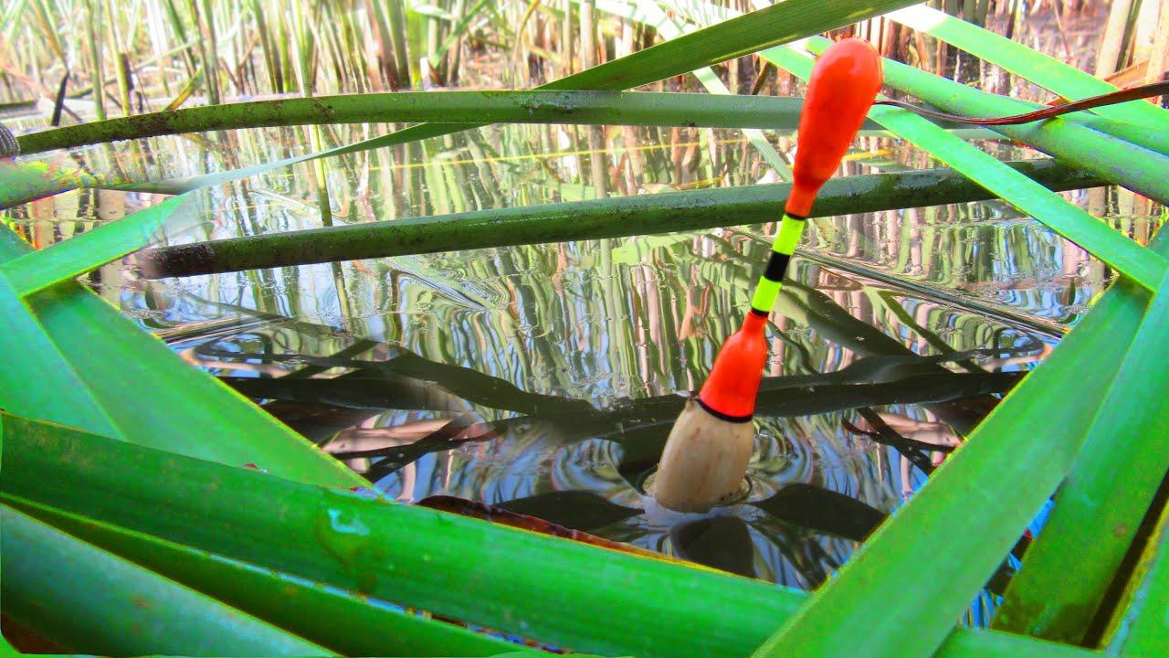 Рыбалка: чем ловить и какие правила важно помнить?