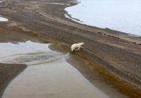 Минприроды уменьшило заповедник в Арктике для добычи угля