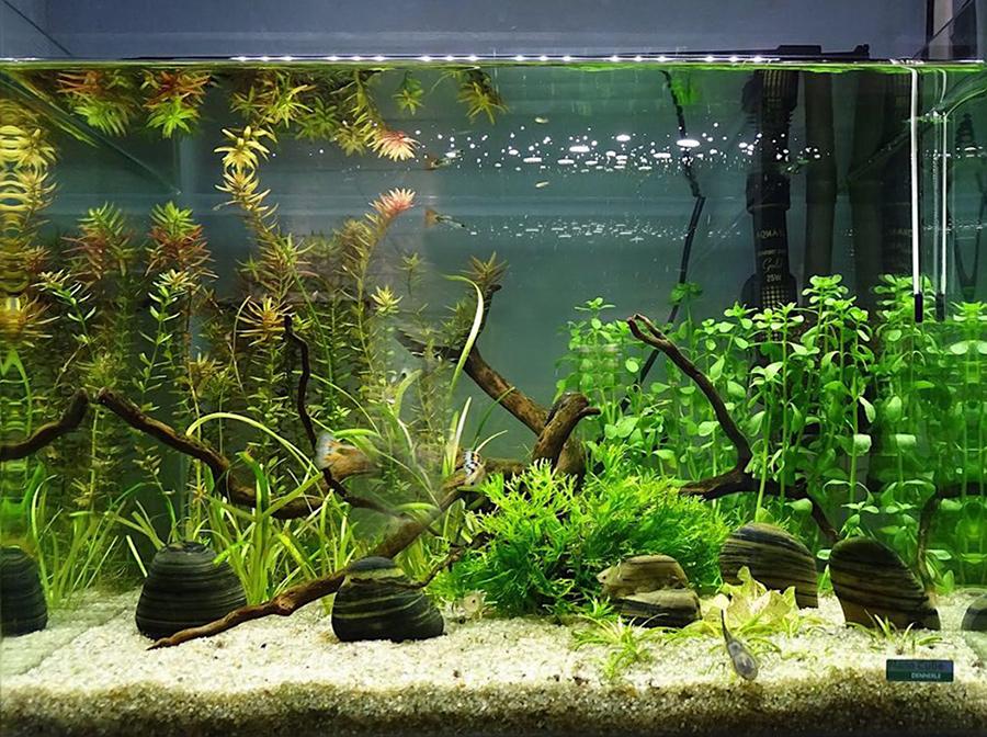 Все для аквариума: где найти хороший магазин?