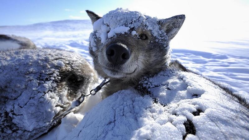 Россиян предупредили о заразной смертельной болезни собак