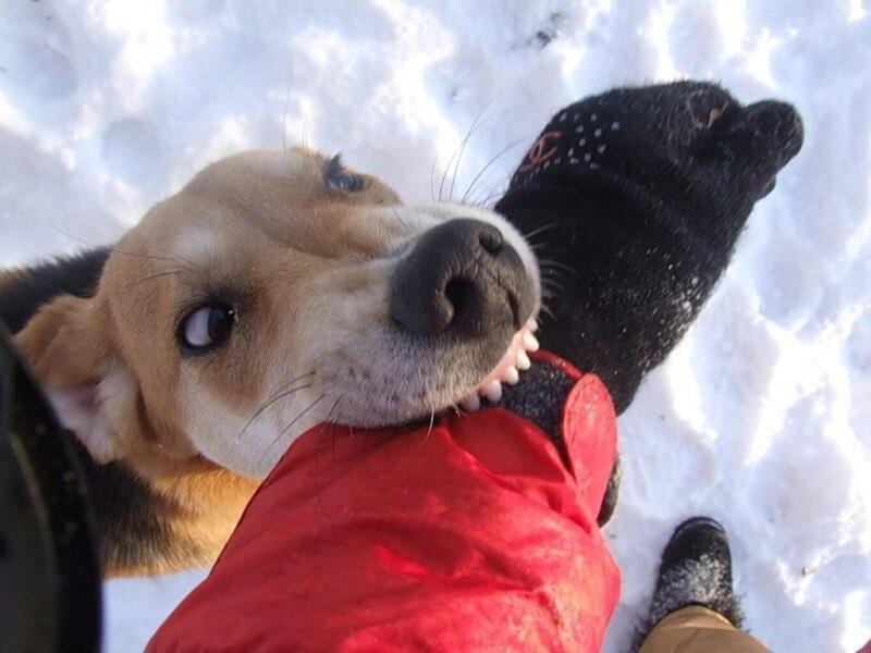«Сидеть» или «Фу»: в МЧС рассказали, как общаться с собаками