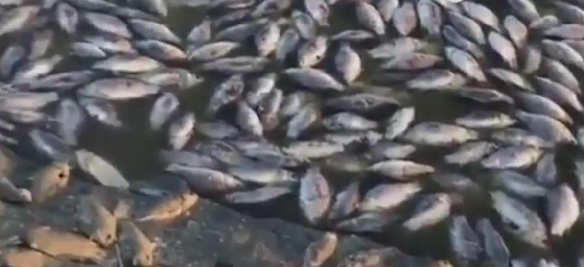 Жители Калмыкии сообщили об экологической катастрофе