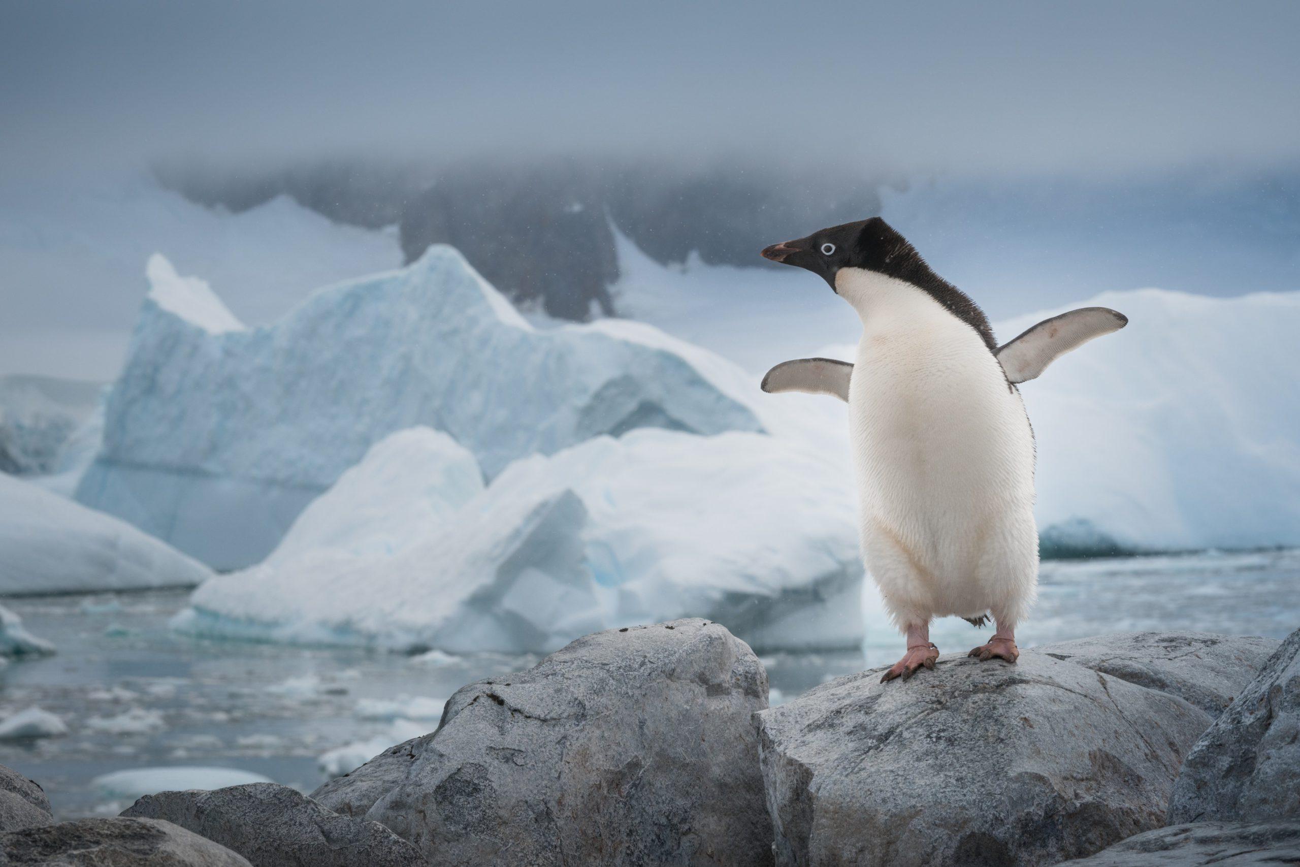 Иммунолог рекомендовал прятаться от коронавируса в Антарктиде