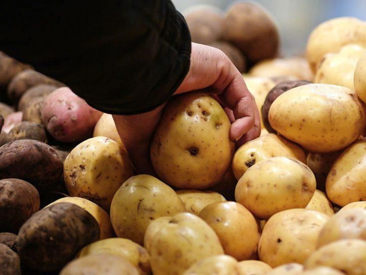 Картофель «экономкласса» предложат россиянам