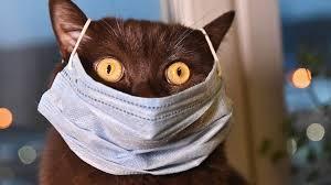 Ученые усомнились в передаче коронавируса от кошек человеку