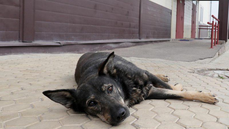 Стало известно число бездомных собак в России