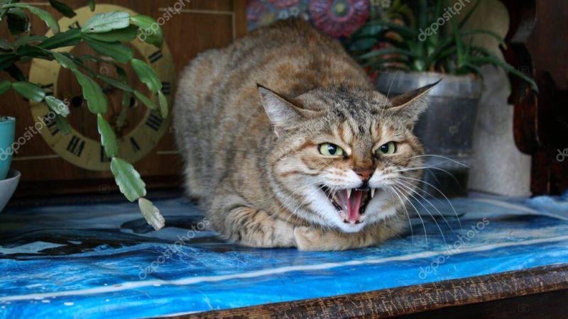 Закон о запрете на продажу животных в зоомагазинах внесли в Госдуму